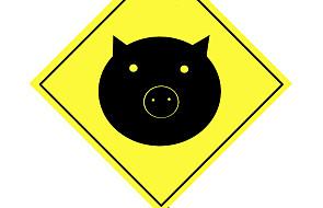 Ubezpieczenie od świńskiej grypy w Polsce