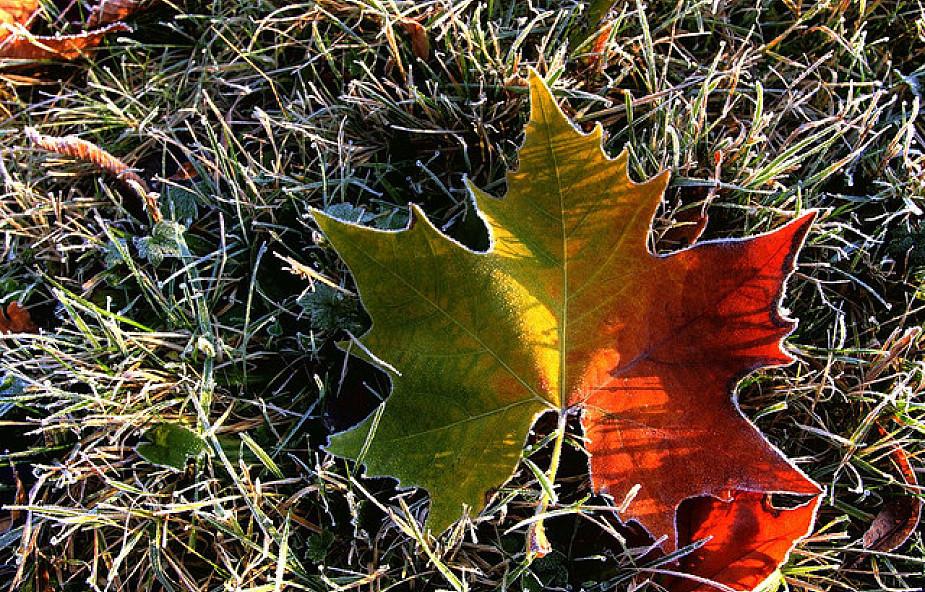 Jak przetrwać jesień?