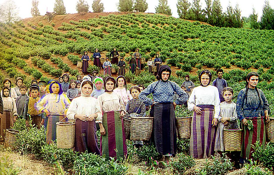 Burowie z RPA mogą zostać farmerami w Gruzji