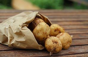 Sałatka z ziemniaków, czerwonej cebuli i bazylii