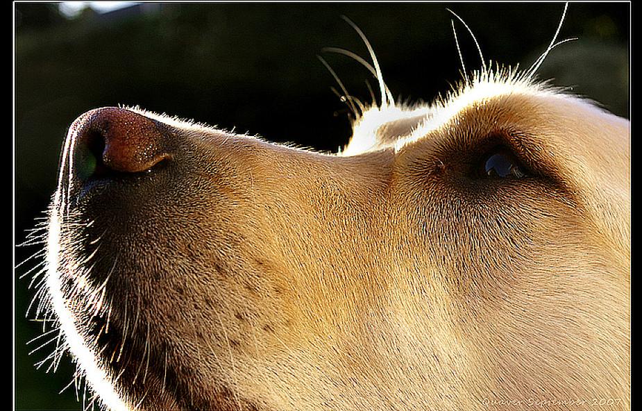 Pies na etacie czyli dogoterapia