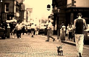 Pies i pan na ścieżce zdrowia