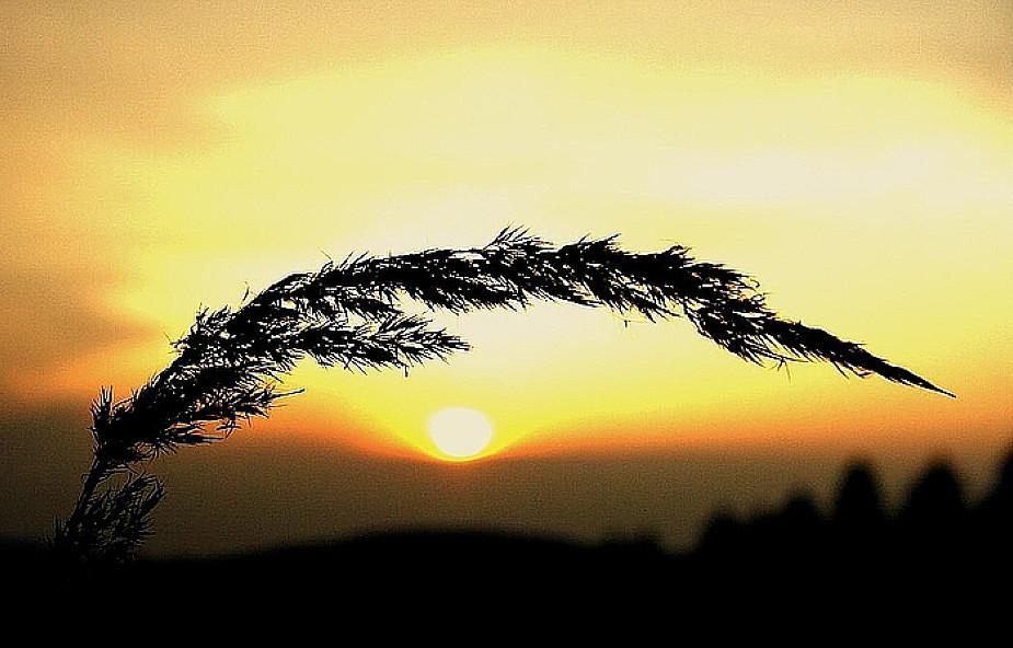Bóg trwający nad światem - mistyka przyrody