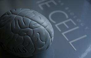 """Najpierw """"patrzymy"""" mózgiem, a później okiem"""