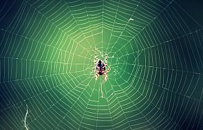 Lęk przed pająkiem nie jest wrodzony