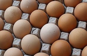 Uwaga na jajka z Niemiec, zatrute dioksynami!