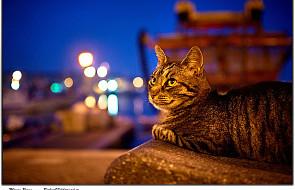 Świat jest ciekawy, a ciekawość zabiła kota