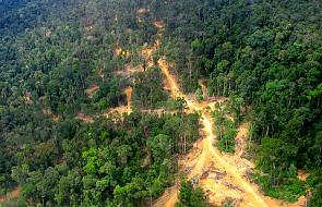 WWF apeluje: Ratujmy zielone płuca Ziemi!