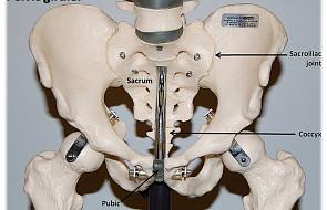 Kości mają wpływ na męską płodność