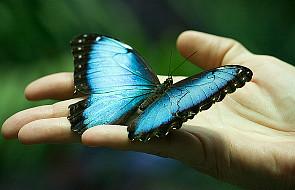 Zobaczysz, coś z tych motyli zrobimy