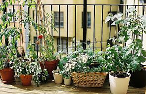 Polaku - dbaj o ogródek, to się opłaca