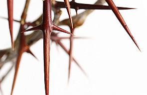 Krzyż objawia, kim jest Bóg