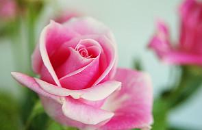 """Aby kwiaty """"stały"""" dłużej - sztuczki kwiaciarek"""
