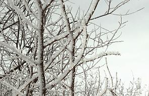 W Bieszczadach powrót zimy. Śnieg i mróz
