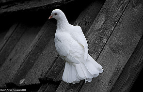Duch Święty - nauczyciel pokoju i piękna