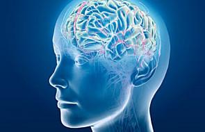 Jak zachować zdrowy mózg - radzą naukowcy