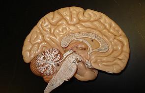 Sprawność umysłowa gorsza po 45 roku życia