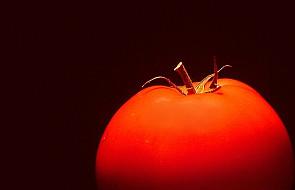 KE wzywa Polskę do monitorowania upraw GMO