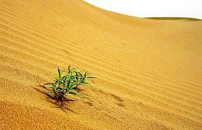 Bierzmowanie - oaza na pustyni
