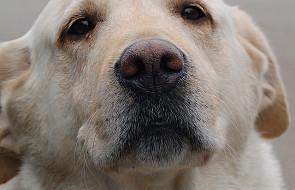 Lublin: pół roku więzienia za zabicie psa