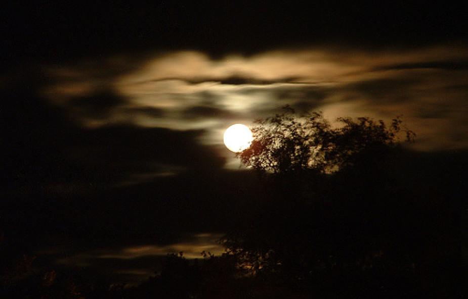 Noc ludzi wolnych