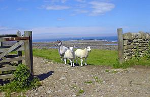 Pasterz nie może być bylejaki - J 10, 1-10