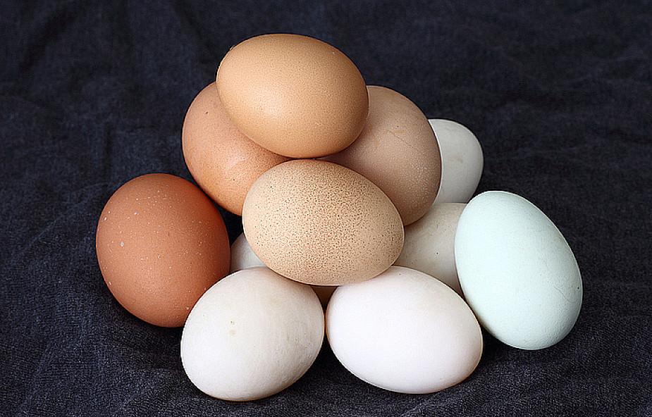 Kolor skorupki jaja jest cechą genetyczną