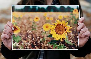Wystawa Kwiatów i wyrywanie chwastów