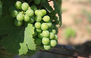 Owoc obfity przyniesiecie - J 15, 1-8