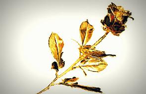 Papieska Złota Róża hołdem dla Matki Bożej