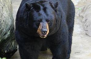 Grzeczny niedźwiedź w sklepie ze słodyczami