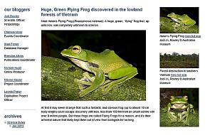 """Odkryto nowy gatunek """"latające"""" żaby"""