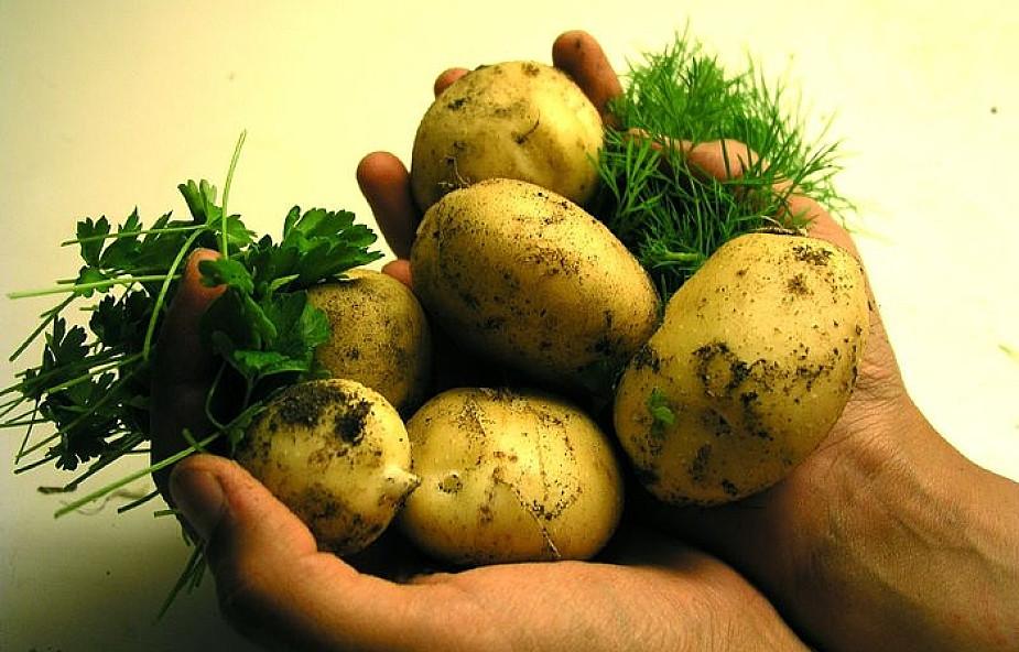 Pomysł na obiad: ziemniaczane kotleciki z koperkiem