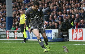 Przerwali mecz przez... wiewiórkę