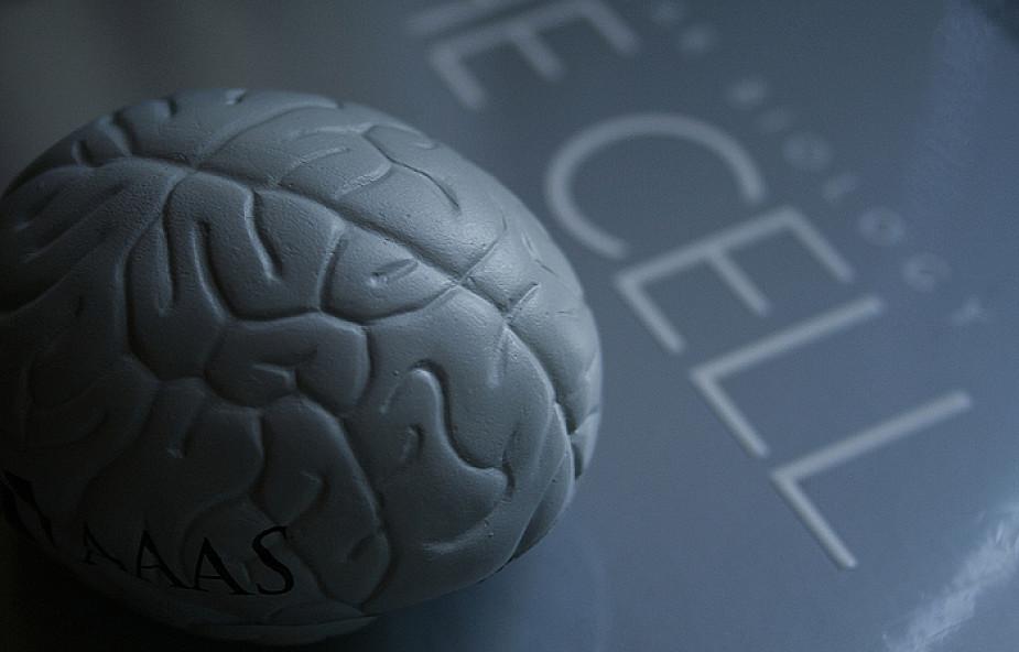 Rozpoczął się Tydzień Mózgu