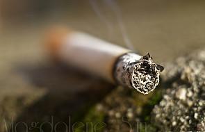 Chorzy na POChP zapadaja też na raka płuca