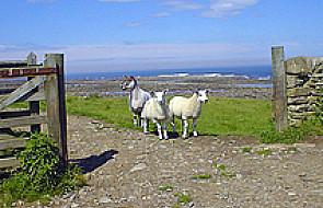Pasterz nie może być byle jaki - J 10, 1-10