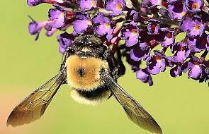 Co nam po pszczołach?