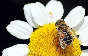 """""""Więcej niż miód"""" - film o tajemnicach pszczół"""