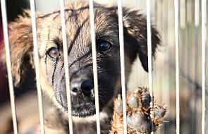 Schroniska dla zwierząt w opłakanym stanie
