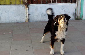 Czy muzyk szybko rozpozna szczekanie psa?