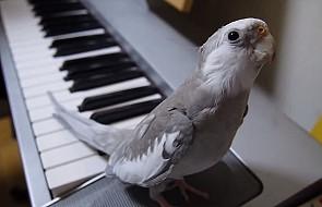 Poznaj wyjątkową wokalistkę