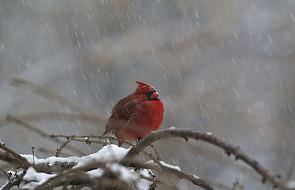 Warto już zacząć dokarmiać ptaki
