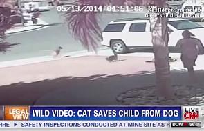 Kot-bohater ratuje małego chłopca