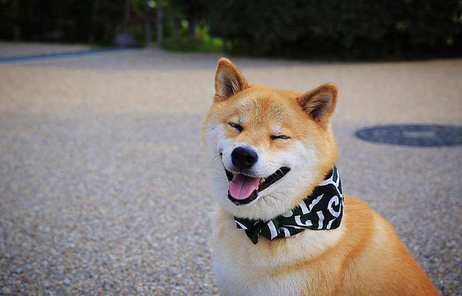 Oto Maru - najbardziej uśmiechnięty pies Japonii