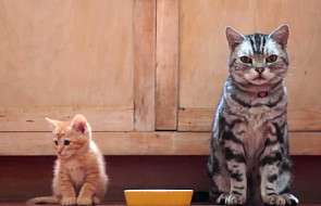 Listy starego kota do młodego