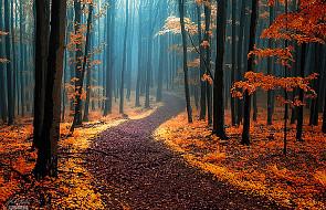 Te ścieżki pobudzą twoją wyobraźnię!