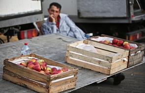 Co ty wiesz o tym politycznym jabłku?