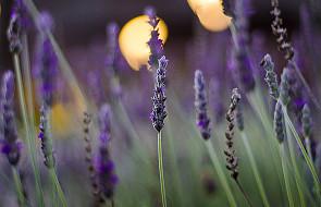 Sekrety aromaterapii