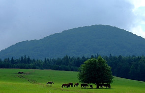 Koń huculski wraca na Huculszczyznę